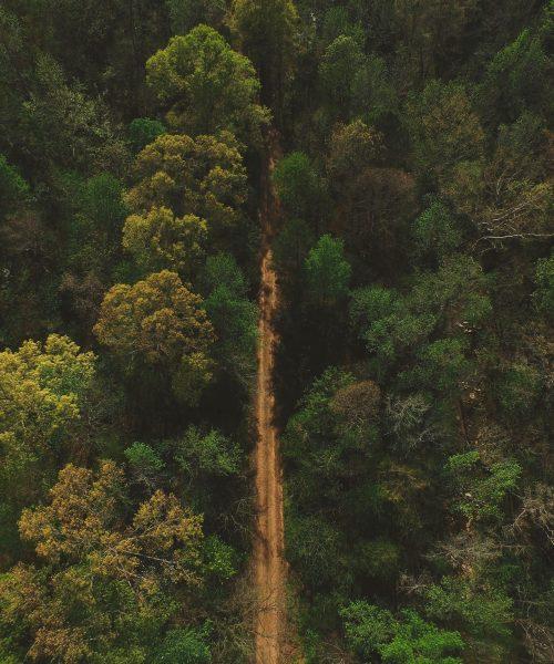 Forestal y Medio Ambiente